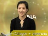 ศัพท์วิทย์กึ่งสำเร็จรูป – Collagen
