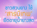 พลังวิทย์ คิดเพื่อคนไทย ตอน ชาวสวนยาง ใช้ 'สารบีเทพ' ยืดอายุน้ำยางสด