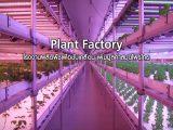 Plant Factory : โรงงานผลิตพืชเพื่อขับเคลื่อน เพิ่มมูลค่าสมุนไพรไทย
