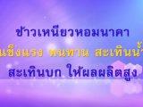 พลังวิทย์ คิดเพื่อคนไทย ตอน ข้าวเหนียวหอมนาคา แข็งแรง ทนทาน สะเทินน้ำ สะเทินบก ให้ผลผลิตสูง