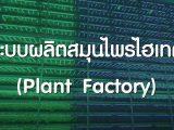 Plant Factory ระบบผลิตสมุนไพรไฮเทค