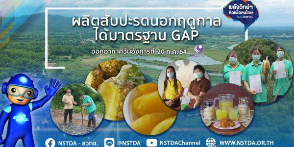 พลังวิทย์ คิดเพื่อคนไทย ตอน ผลิตสับปะรดนอกฤดูกาลได้มาตรฐาน GAP