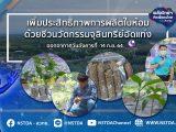 พลังวิทย์ คิดเพื่อคนไทย ตอน เพิ่มประสิทธิภาพการผลิตใบห้อมด้วยชีวนวัตกรรมจุลินทรีย์อัดแท่ง